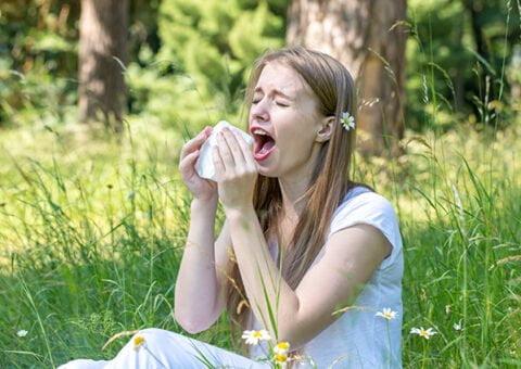 Ny metod förutsäger pollensäsongen
