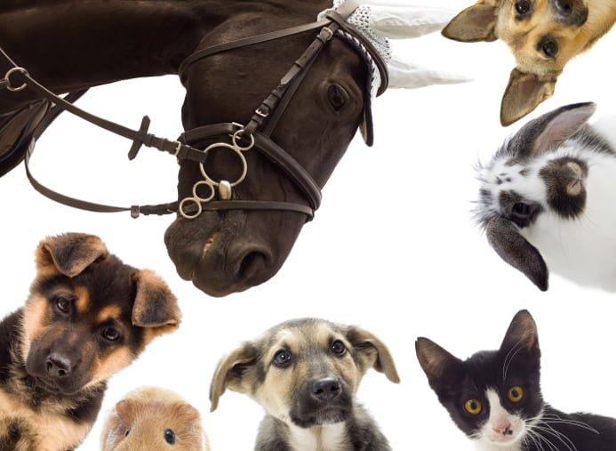 Kombinerat pälsdjursvaccin