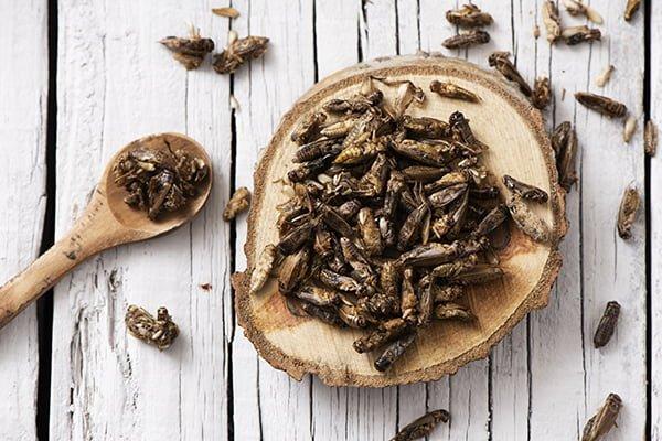 Ätliga insekter